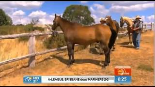 Legacy of The Man from Snowy River