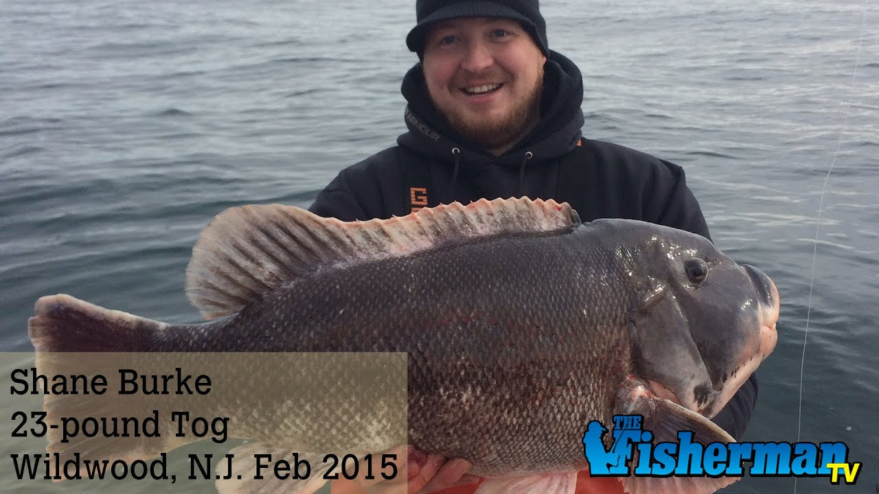 February 9 2015 new jersey delaware bay fishing report for De fishing report