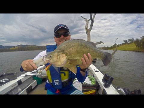Fishing For Yellowbelly Lipless Crankbait Claims Lake Hume Keg