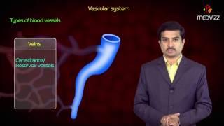 Types of Blood vessels - Arteries , Arterioles , Capillaries , Venules , Veins