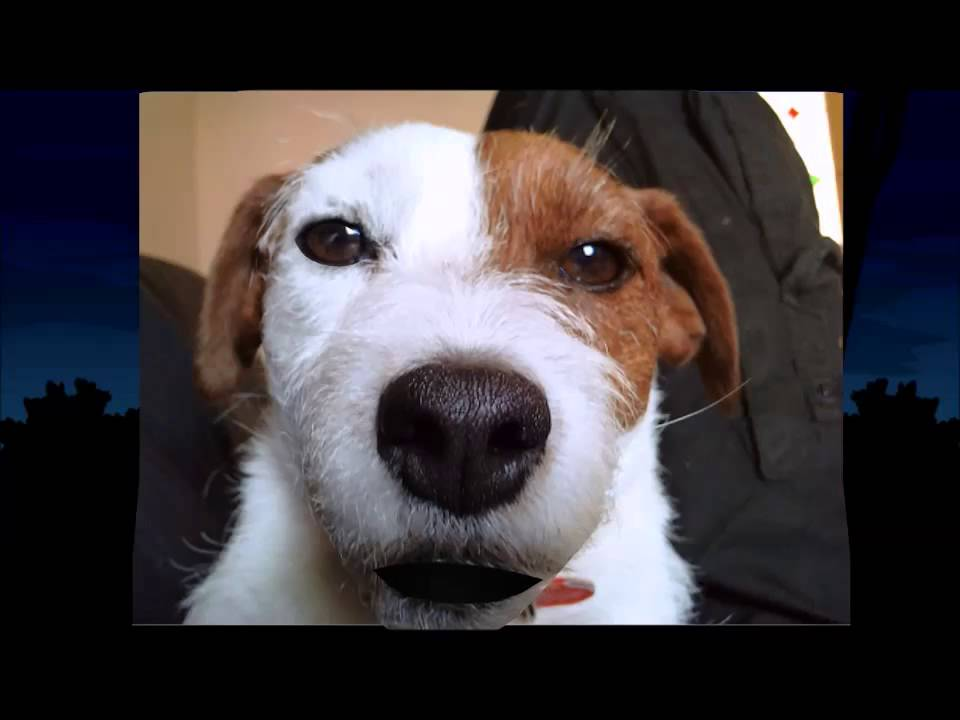 Happy Birthday Liam Charlie The Jack Russell Youtube