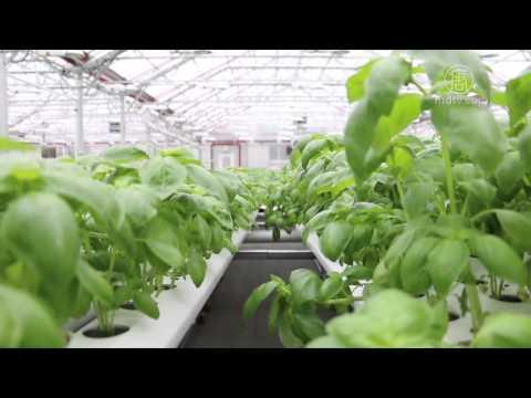 健康食品 绿色能源 布鲁克林超市好样板