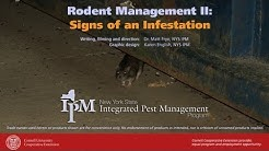 Rodent Management II: Signs of a Rodent Infestation