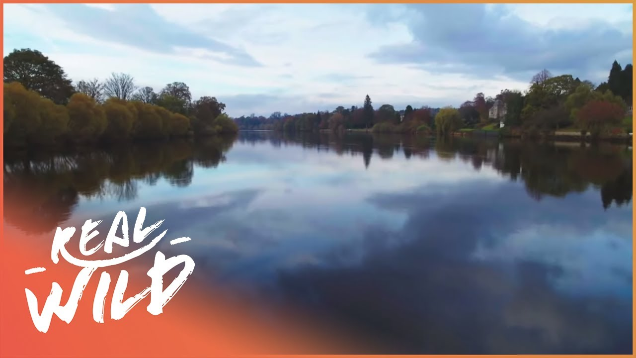 What Lies On The River (Wildlife Documentary)   The River   Real Wild