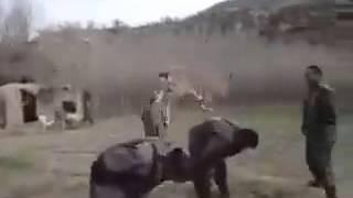 Animales haciendo cosas extrañas 4