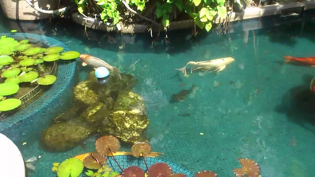 peces de fuente youtube