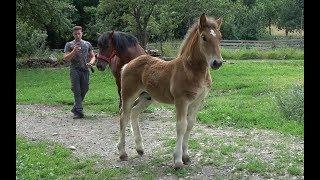 Caii lui Ionut de la Toaca, Targu Mures - 2019 Nou !!!