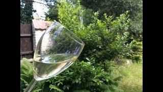 Wino z kwiecia czarnego bzu to pyszny trunek. Tradycja głosi, że po...