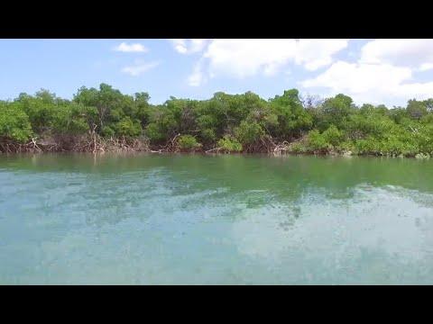 Conheça Galinhos, no Rio Grande do Norte - Diário Turismo