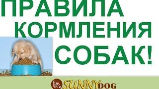 правила кормления собак  Какие основные моменты кормдления и питания нужно знать и придерживаться