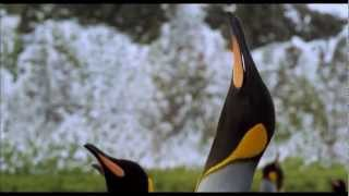 Король пингвинов. The Penguin King. 2013 Трейлер HD 1080