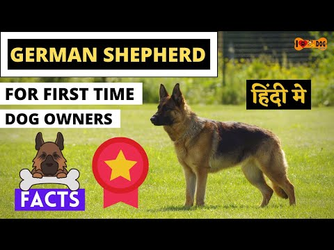 German Shepherd For First Time Dog Owner - Full Tips About Gsd Dogs In Hindi