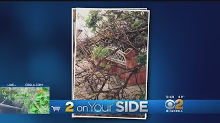 2 On Your Side: Tree Liability