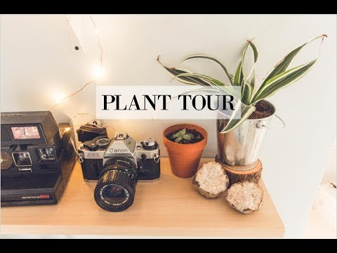 My Plant Collection!