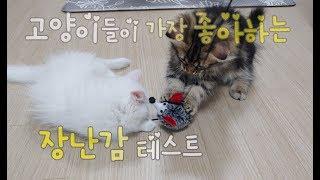 고양이가 가장 좋아하는 장난감은? 고양이장난감 반응테스트해봤어요! 고양이 장난감추천