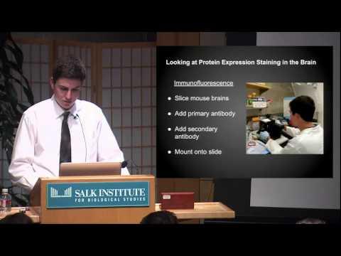 Salk Scholars Presentation 2015: Ben Ehrlich