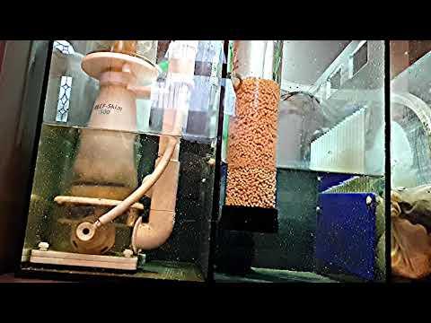 H2 Ocean Reactor + iQuatics Bio Pearls at 3,000 lph