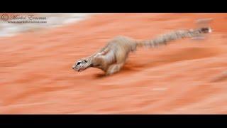 7 неуловимых животных  Африки  Документальный фильм HD 2017