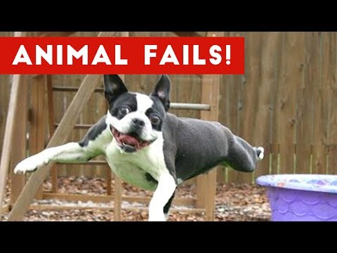 Thumbnail: Funniest Animal Fails May 2017 Compilation | Funny Pet Videos