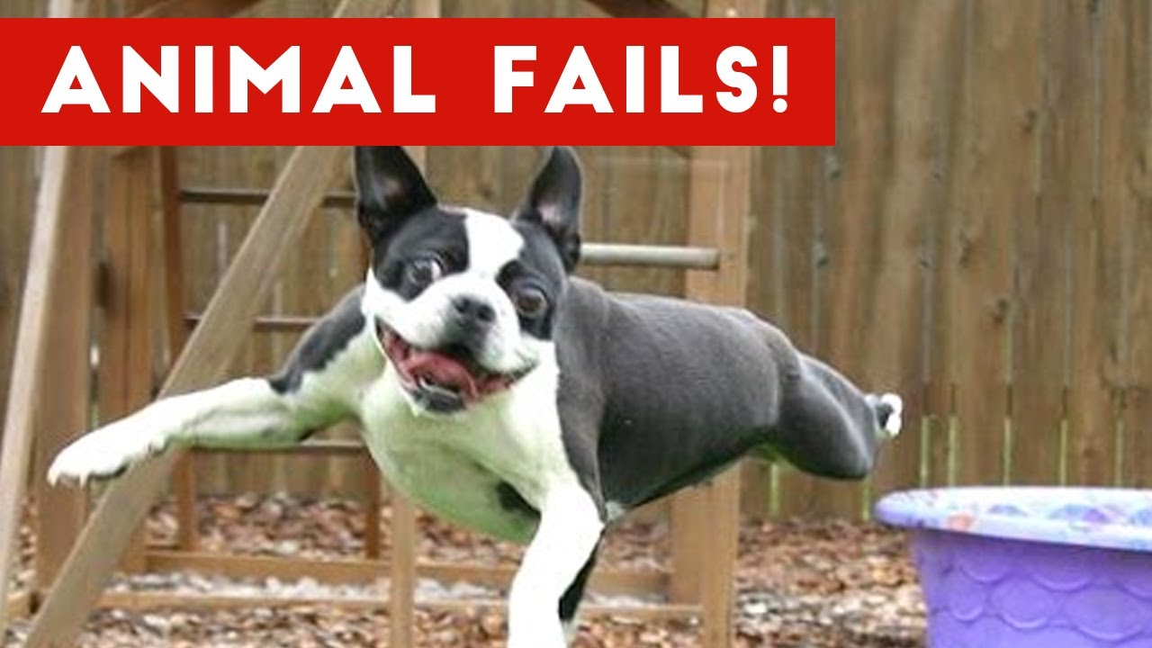 Funniest Animal Fails May 2017 pilation