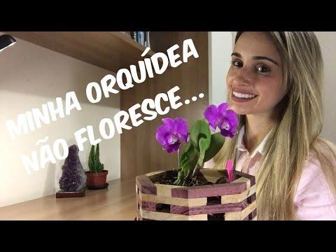 MINHA ORQUÍDEA NÃO FLORESCE!