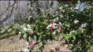 「侍ニッポン」(1931年3月発売)...初代歌:徳山璉、カバー:村田英雄...
