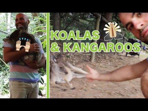 LONE PINE KOALA SANCTUARY BRISBANE #AUSTRALIA 2017 #HERZENSFOLGER REISEN