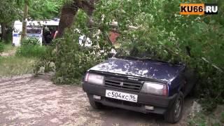 В Каменске тополь повредил 2 автомашины