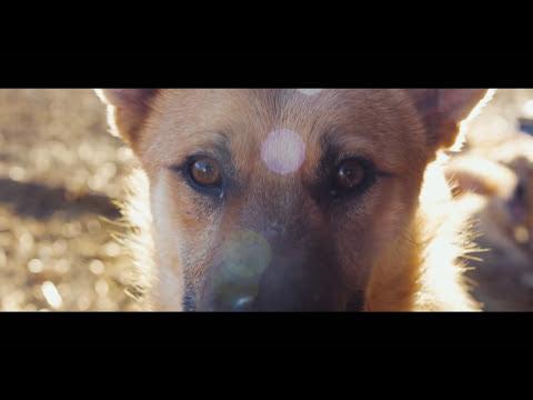 PUNKREAS - Fermati e respira - videoclip