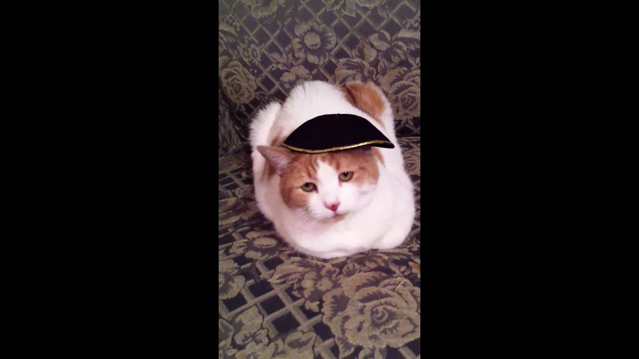 Cat Wearing Yarmulke