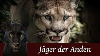 Der Puma - Der Jäger der Anden