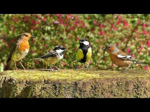 Bird Sounds on A Beautiful Spring Morning