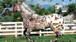 Mamatschi schenk mir ein Pferdchen..... Cover