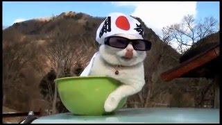 超搞笑影片!寵物貓咪爆笑場面大集合2!
