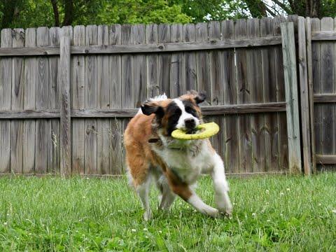 Dog Training Kansas City Worldwide Dog Training