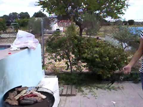Las consecuencias de eliminar avispas doovi - Como ahuyentar avispas ...