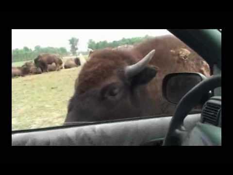 Animals Go Wild at African Safari Park in Port Clinton, Ohio