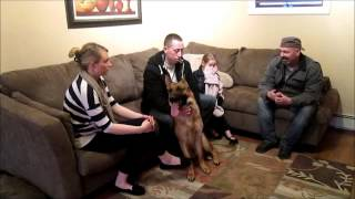 Long Island Dog Training 4 Year Old Controls German Shepherd