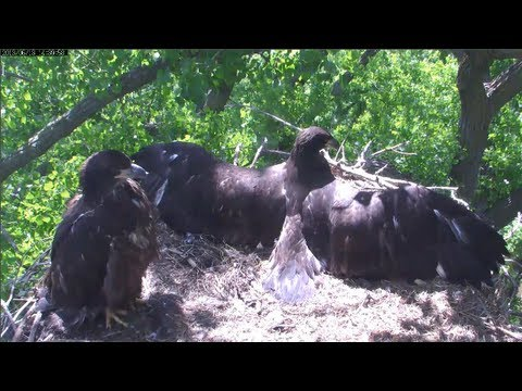 MNBound Eagles I Am A Thunderbird 6-13-13 - YouTube - photo#31