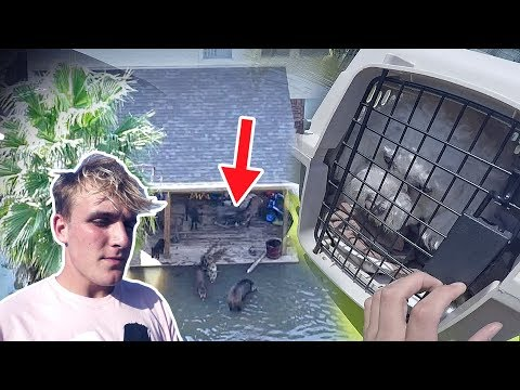 Thumbnail: Saving Animals Caught In The Hurricane (emotional..)