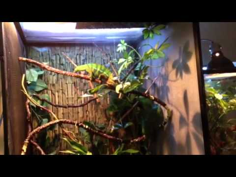 My Chameleon Has His Own Rain Forest