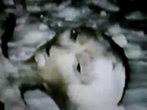 Real Alien Image of  bodys found over Quebec Canada 1992.flv