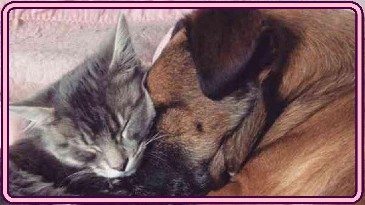 【感動】病気で苦しむ犬に寄り添う猫。強い絆で結ばれた2匹の家族愛に胸が熱くなる【世界が感動!涙と感動エピソード】