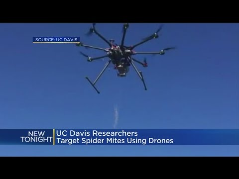 UC Davis Researchers Targeting Spider Mites With Bug Drone Strikes