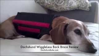 Dachshund Wiggleless Dog Back Brace Review