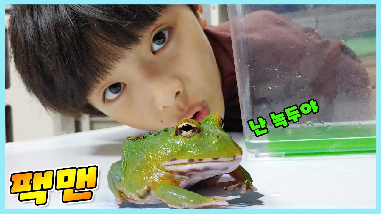 팩맨 개구리 입양했어요!  아주 귀여워요!  사육장 만들기! 먹이주기~ 정훈TV