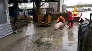 Emergenza maltempo a Budrio, pompieri al lavoro per salvare animali e beni delle aziende agricole