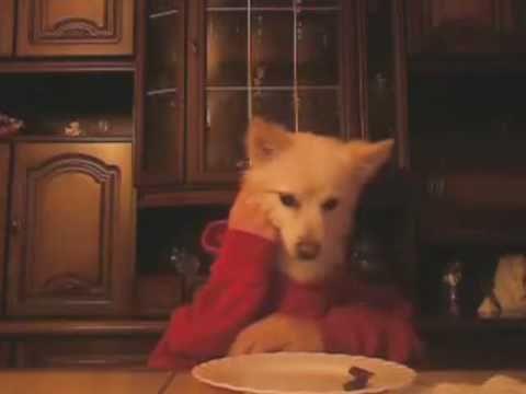 dog eats with hands hund isst mit h nden youtube. Black Bedroom Furniture Sets. Home Design Ideas