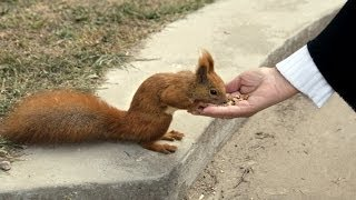 Why Are Squirrels Found in Our Parks ??
