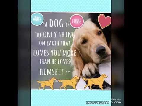 Dog quotes (really sad) - YouTube